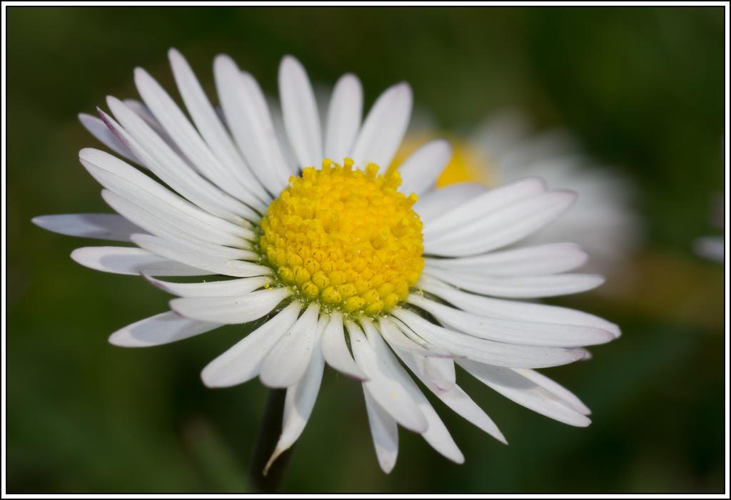 C'est le printemps, la saison des fleurs K5A15405