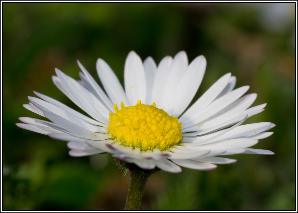 C'est le printemps, la saison des fleurs K5A15416