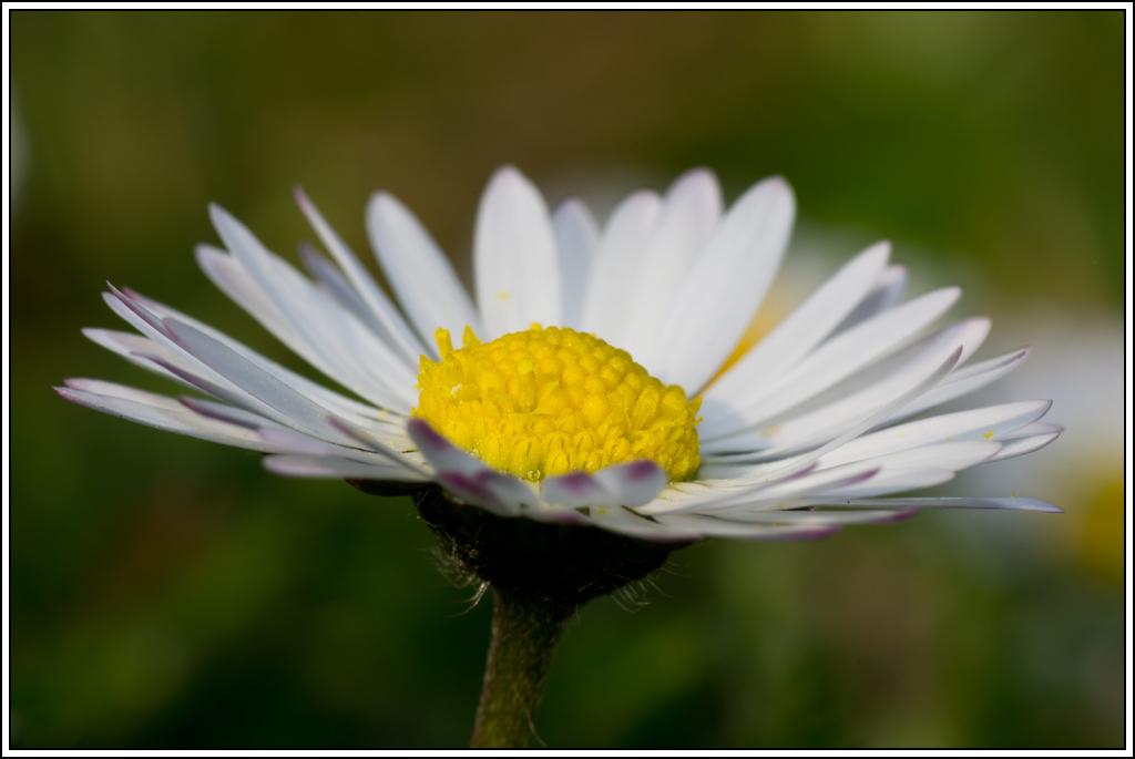 C'est le printemps, la saison des fleurs K5A15417