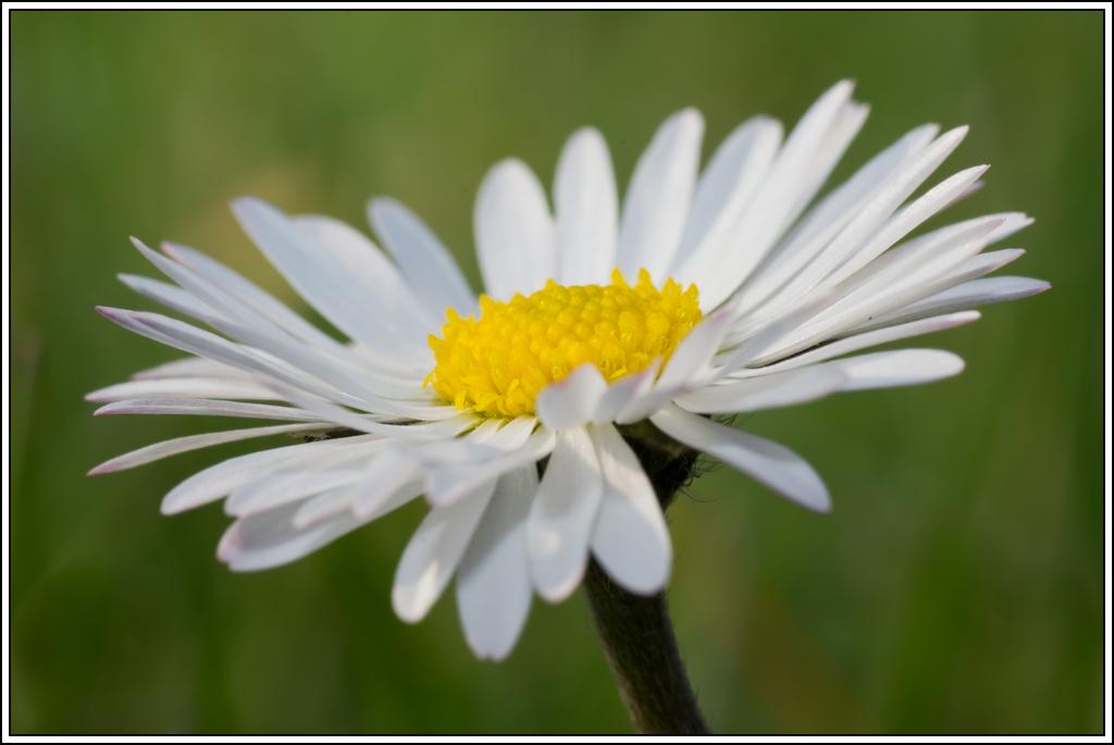 C'est le printemps, la saison des fleurs K5A15430