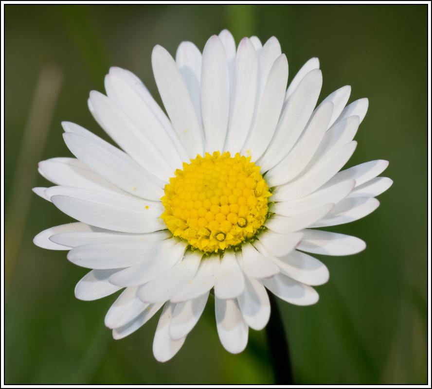 C'est le printemps, la saison des fleurs K5A15432