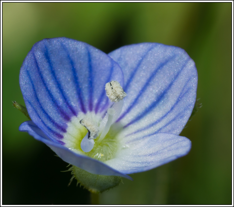 C'est le printemps, la saison des fleurs K5A15433