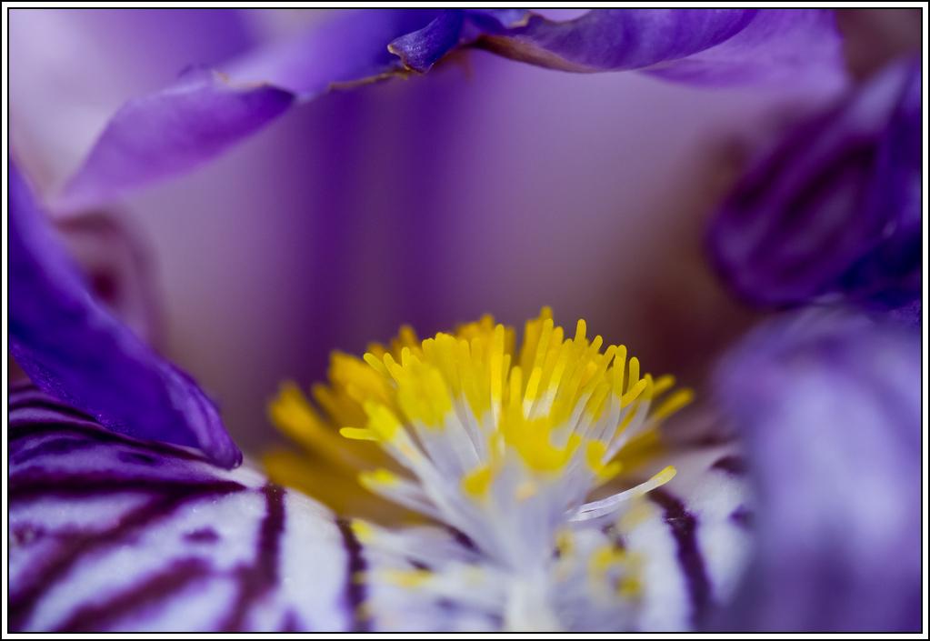 C'est le printemps, la saison des fleurs K5A16160