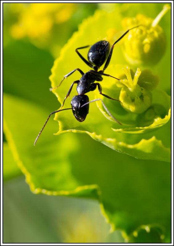 Petite série sur les fourmis - Page 2 K5A16362