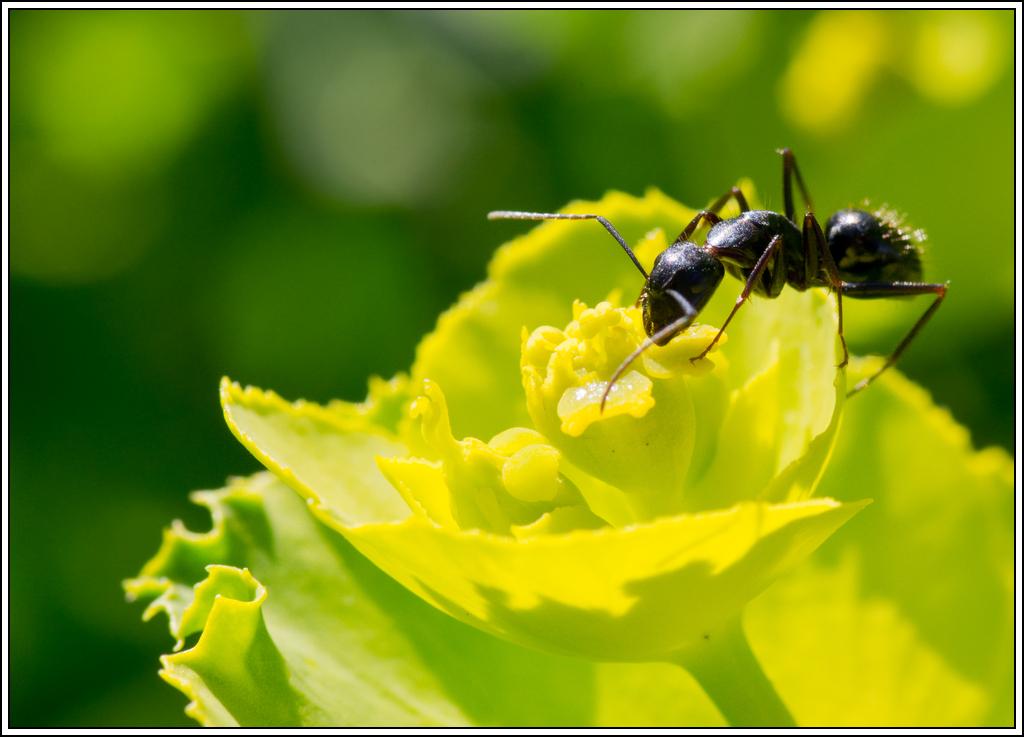 Petite série sur les fourmis - Page 2 K5A16365