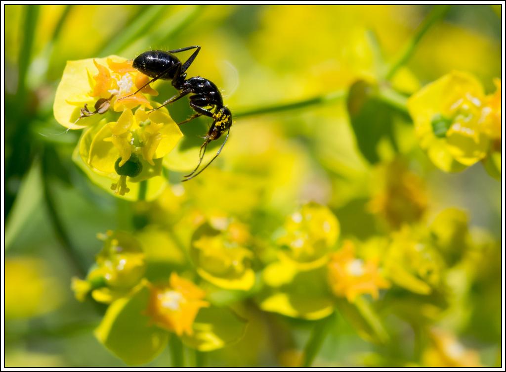 Petite série sur les fourmis - Page 2 K5A16382