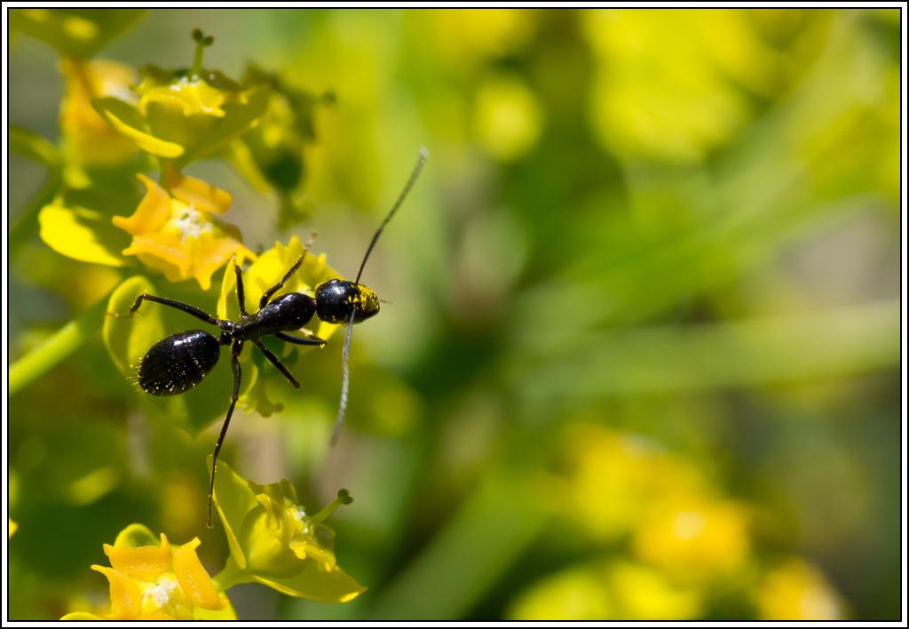 Petite série sur les fourmis - Page 2 K5A16386