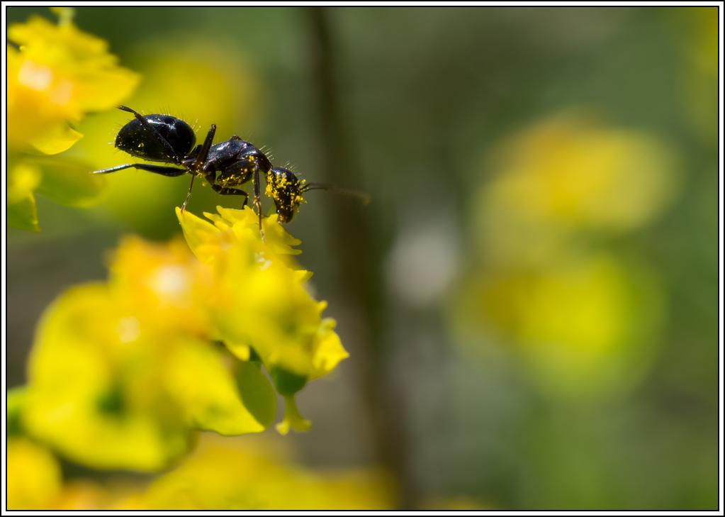 Petite série sur les fourmis - Page 2 K5A16388