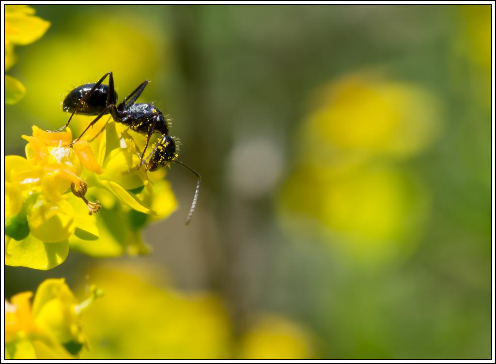 Petite série sur les fourmis - Page 2 K5A16389