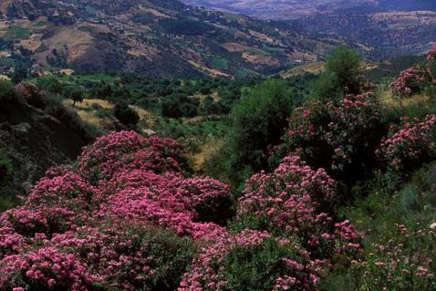 بلاد المغرب بالصور N7