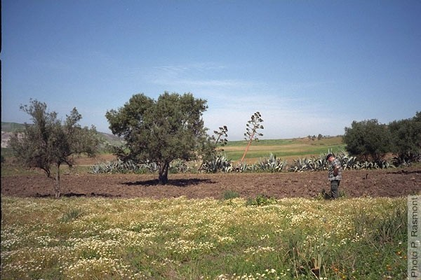 بلاد المغرب بالصور _1997_MA007_02_IMG0002