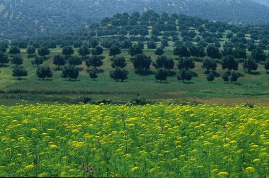 بلاد المغرب بالصور Morocco964