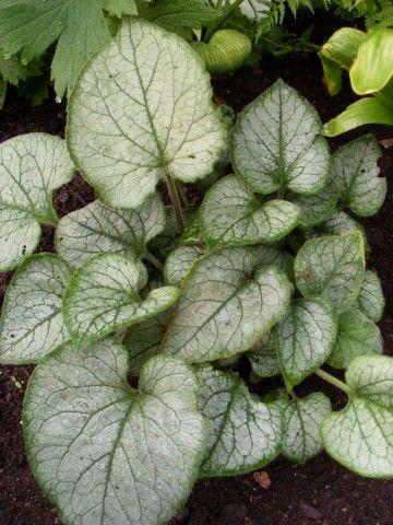 Растения для тени или Тенистый сад. Dm-7MOF