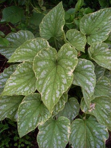 Растения для тени или Тенистый сад. Dm-9GB3