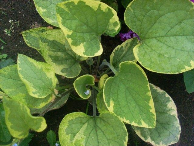 Растения для тени или Тенистый сад. Dm-EZ6N