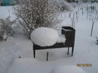 Зима в саду - Страница 2 Dt-3TOL
