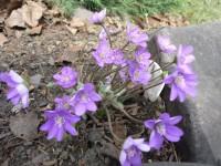 Весна,весна на улице!!! - Страница 17 Dt-7K5E