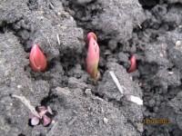 Весна идет, весне дорогу! - Страница 11 Dt-7U0K