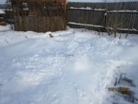 Зима в саду Dt-AQP4