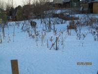 Зима в саду - Страница 3 Dt-GC1P