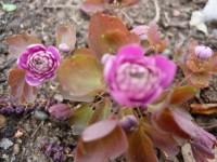 Весна,весна на улице!!! - Страница 17 Dt-I8YQ