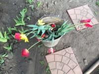 Тюльпаны - Страница 2 Dt-PQPQ