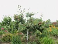 Расцветали яблони и груши... - Страница 2 Dt-WS2J