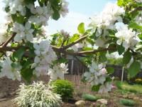 Расцветали яблони и груши... Dt-XRT4