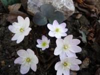 Весна,весна на улице!!! - Страница 17 Dt-XWNB