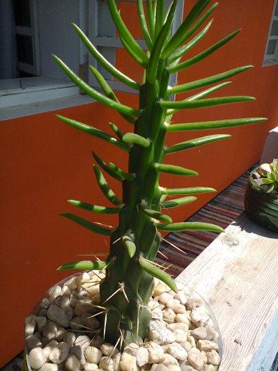 Identificare plante necunoscute - Pagina 6 407128081