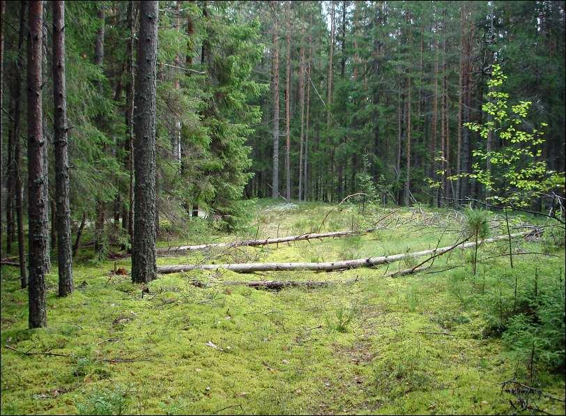 Поляна в лесу. 487148