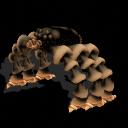 El planeta Pankehua y sus criaturas NMtAragnideclkVN