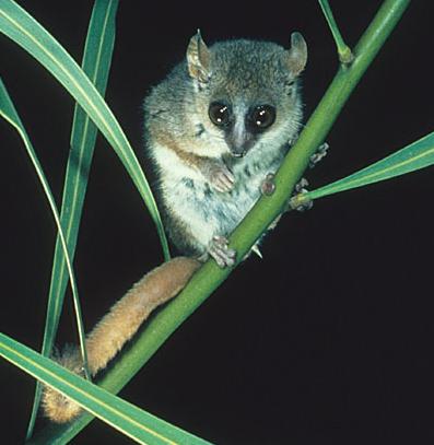un animal - blucat- 28 août trouvé par ajonc - Page 2 204lg