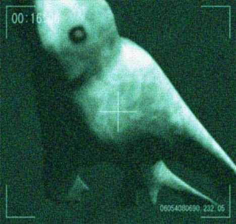 Mysteriöses nach der Thriller Bark.?. - Seite 2 Antarctic_humanoid_2
