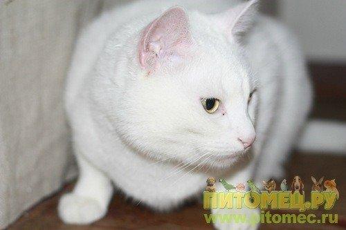 Фото наших кошек 732066