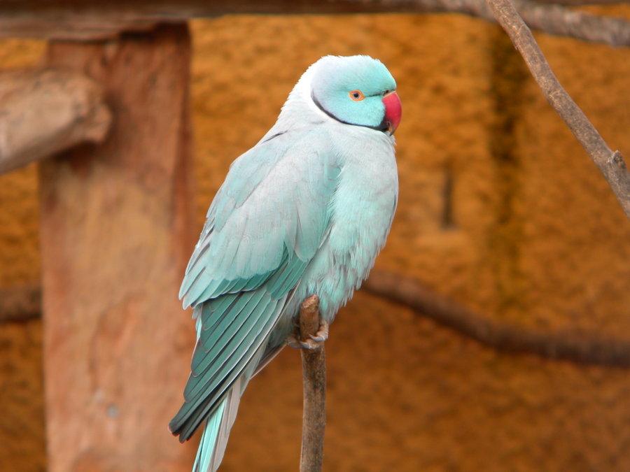oiseau Martin 6 avril trouvé par Martine Ozherelovyj3
