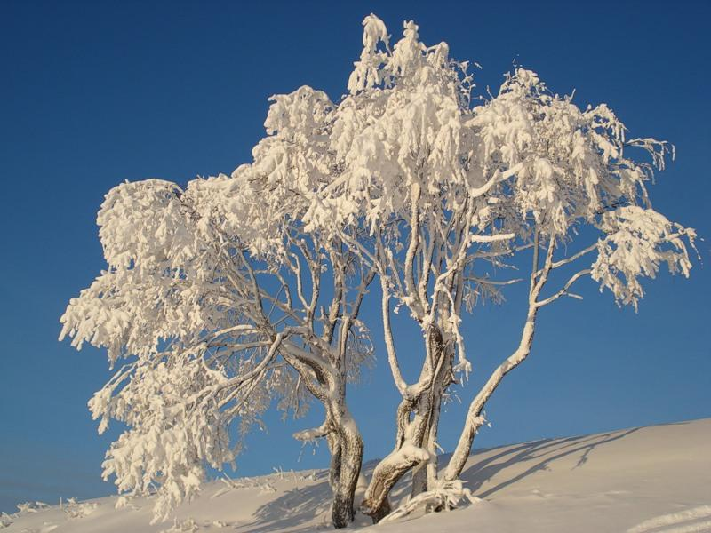 Sve što vas asocira na zimu u fotografiji - Page 2 13213_ef021b17c24b0cc0be480b3300a295f7_large