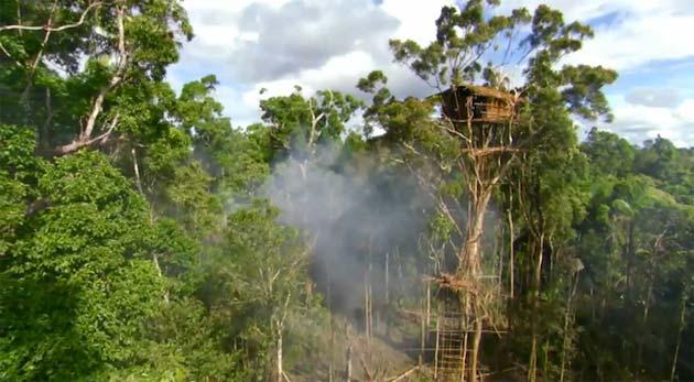 Plemena Kuca-na-drvetu1