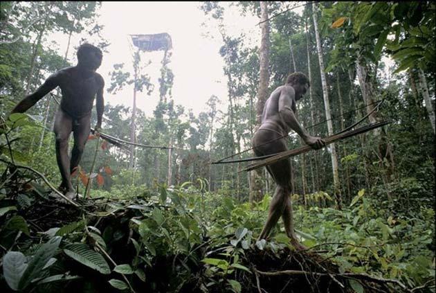 Plemena Kuca-na-drvetu2