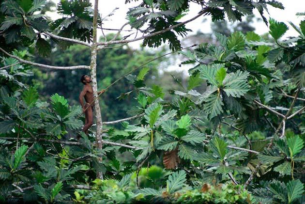 Plemena Kuca-na-drvetu3