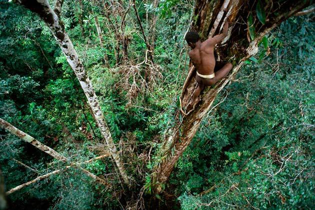 Plemena Kuca-na-drvetu4