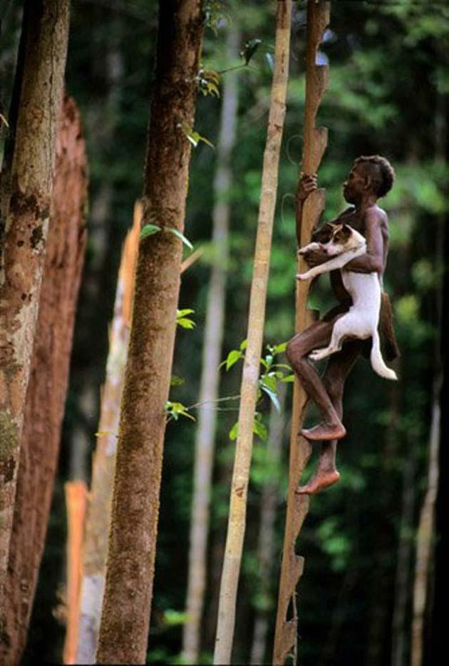 Plemena Kuca-na-drvetu5