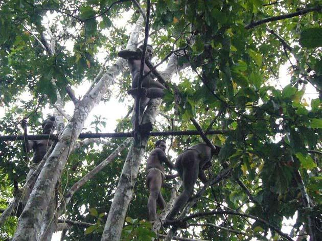 Plemena Kuca-na-drvetu6