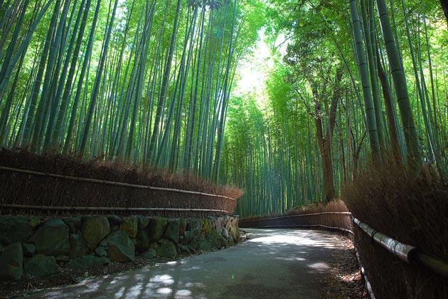 Zanimljivosti iz  geografije - Page 2 Suma-bambusa2