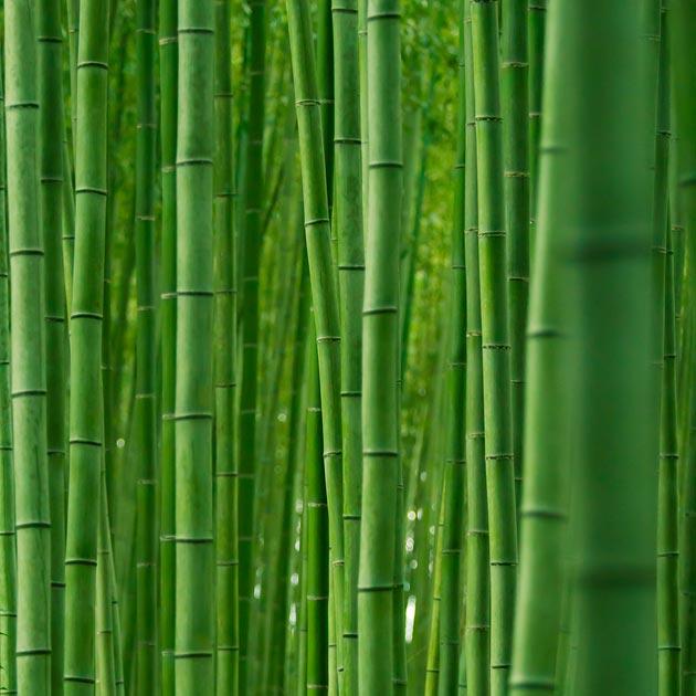Zanimljivosti iz  geografije - Page 2 Suma-bambusa4