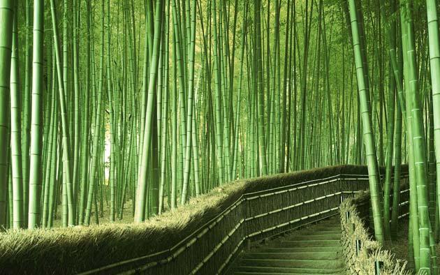 Zanimljivosti iz  geografije - Page 2 Suma-bambusa6