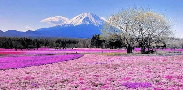 Najlepši nacionalni parkovi sveta Fuji-Hakone-Izu