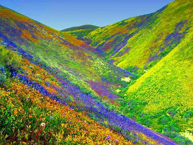 Najlepši nacionalni parkovi sveta Dolina-cvijeca-1