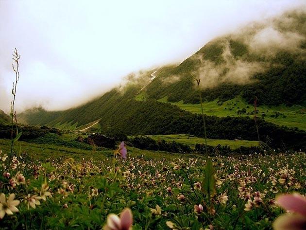 Najlepši nacionalni parkovi sveta Dolina-cvijeca-10