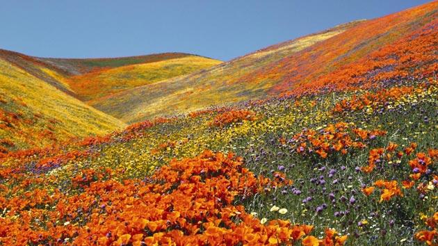 Najlepši nacionalni parkovi sveta Dolina-cvijeca-2